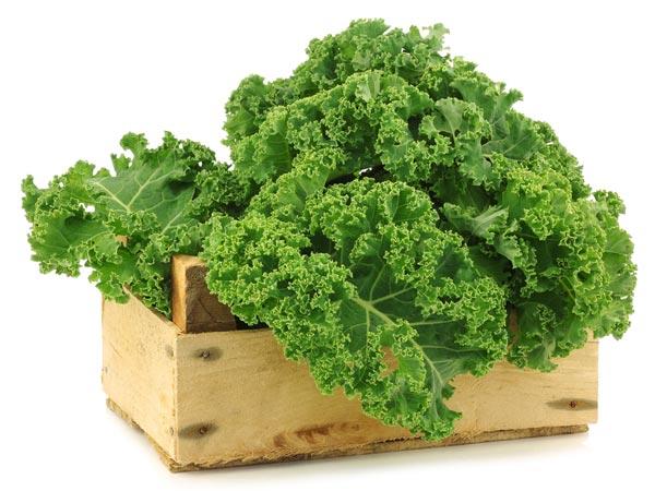 Bột cải xoăn Kale 44 gói hàng nhật nội địa