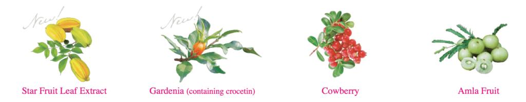 Shiseido The Collagen Relacle bổ sung nhiều loại trái cây tươi tự nhiên giúp da khoẻ từ bên trong